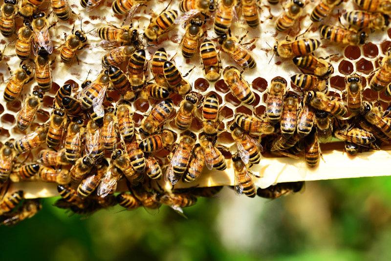 Campagne de parrainage du rucher partagé 2018