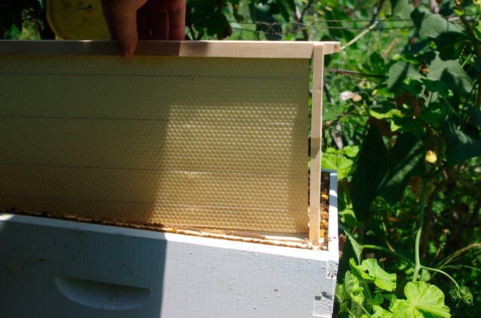 Cire ruche
